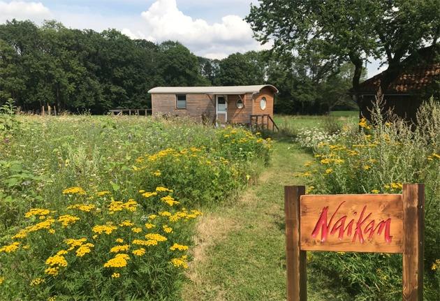 Naikan-Holzhaus Wiese